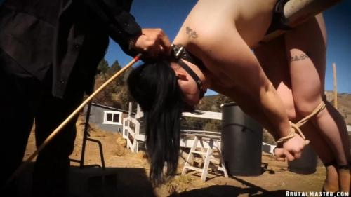 Going In The Box – Lita Lecherous. 04 Nov 2019. BrutalMaster.com (980 Mb)